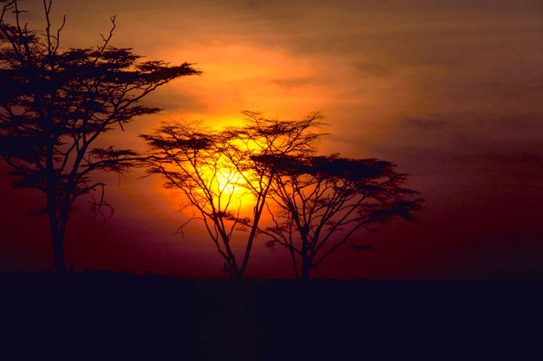 African Sunset (Wikipedia)