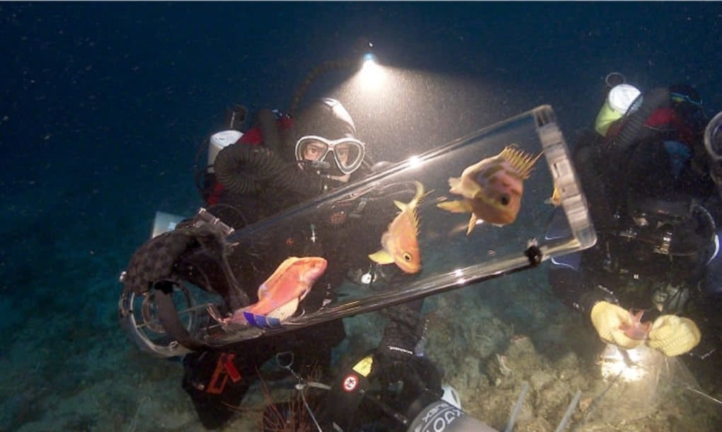 a diver in deep ocean captures fish thanks to a new gadget subcas